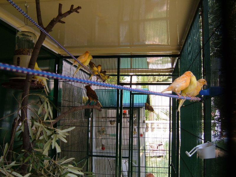 Aviary July 8th 2010