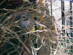 Birds03Oct2010