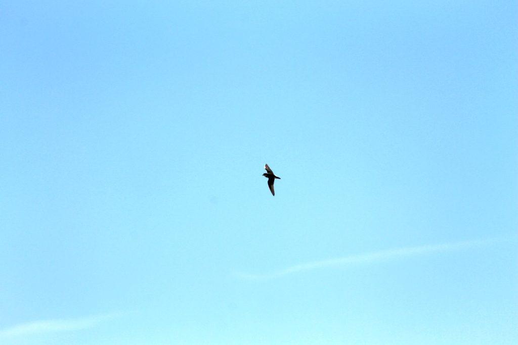 bird250412