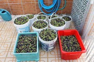 olives3011112