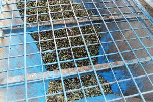 olives4301112
