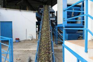 olives5301112