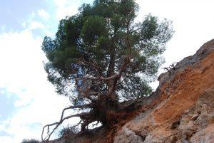 Tree2240413