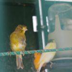 canary1120813