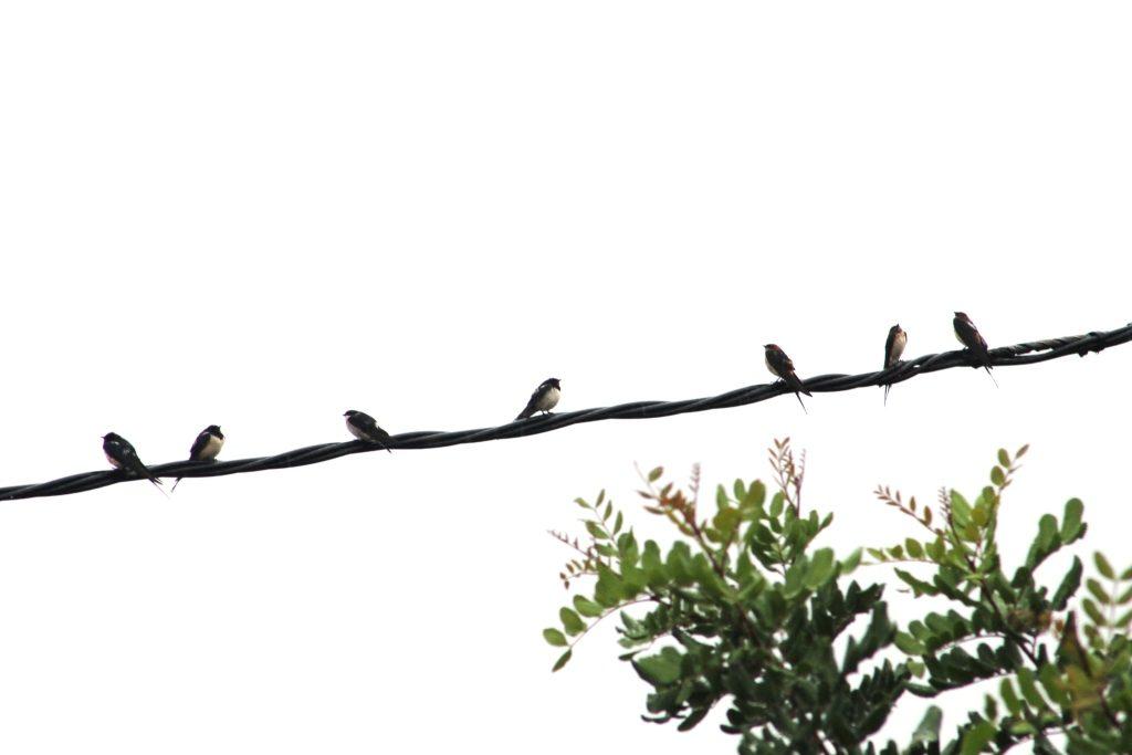 wetswallows070913