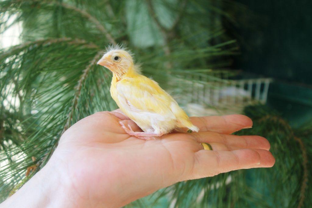 chick190314