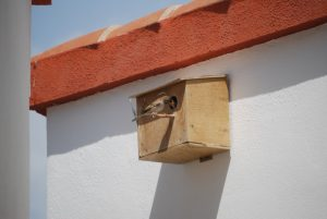 chick_box3
