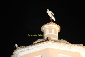 Storks_Arboleas_Tower_28Aug2014_wm