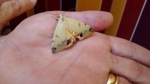 moth240914