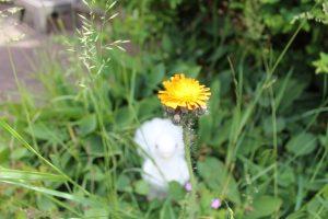 flower5190615